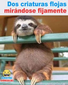 Dos criaturas mirándose fijamente - Chistes geniales The Effective Pictures We Offer You About Memes about relationships A quality picture can tell you many things. You can find the most beautiful pic Lol Memes, Funny Memes, Animal Jokes, Funny Animals, Cute Animals, Funny Spanish Memes, Spanish Humor, Triste Disney, Northwestern University