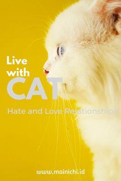 Mainichi - Hidup Bersama Kucing