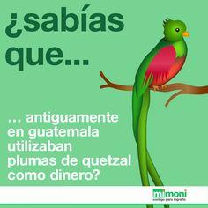 Los billetes y monedas en Guatemala tienen aves quetzales en representación a cómo se pagaba antes.