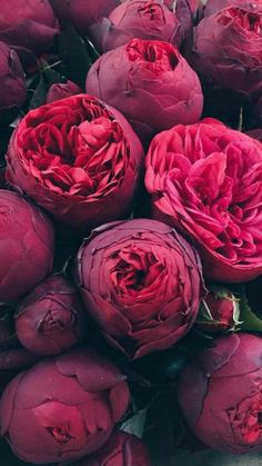 ideas for flowers bouquet floral arrangements gardens Flower Backgrounds, Flower Wallpaper, Iphone Backgrounds, Iphone Wallpapers, Spring Flowers Wallpaper, Red Wallpaper, Pretty Wallpapers, Screen Wallpaper, Wallpaper Quotes