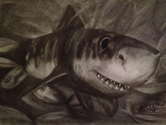 'Predator' charcoal art by 'frogster'