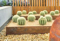 Arid Rooftop | Jenny Smith Gardens