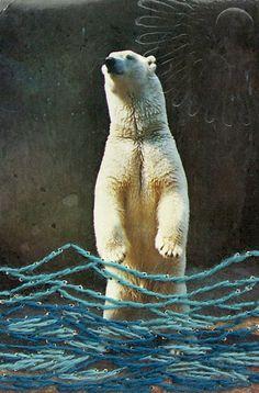 "Polar Bear Kathryn Hunter water: Polar Bear vintage postcard, letterpress deboss 12"" x 9"""