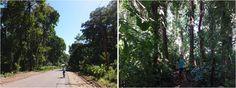 Ruta a manzanillo en bicicleta a Puerto Viejo