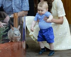 Pin for Later: 37 Ridiculously Cute Prince George Pictures When He Freaked Out Over a Bilby