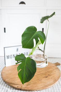pilea vermehren mit baby pflanzen von plants pinterest ableger gelassenheit und pflanzen. Black Bedroom Furniture Sets. Home Design Ideas