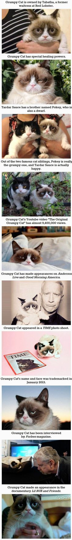 Funny pictures about 30 things you didn't know about grumpy cat. Oh, and cool pics about 30 things you didn't know about grumpy cat. Also, 30 things you didn't know about grumpy cat. Funny Cat Photos, Funny Cats, Funny Animals, Funny Pictures, Funny Images, Memes Humor, Cat Memes, Grumpy Cat Quotes, Grumpy Cat Humor