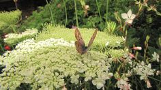 Our flora and fauna are fantastic too Flora And Fauna, Plants, Plant, Planets