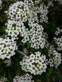 Piccoli fiori di campo