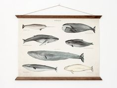 Whales A3 Canvas poster - vintage educational chart illustration - home decor - WHAP3007. $45.00, via Etsy.