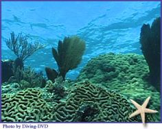 The Florida Reef, which lies a few miles seaward of the Florida Keys, is the only living coral barrier reef in the continental U.S. and is the third largest coral reef system in the world. Plenty of snorkeling opportunities. (Advice from the National Oceanic and Atmospheric Administration about protecting reefs here: http://coralreef.noaa.gov/getinvolved/whatyoucando/ )