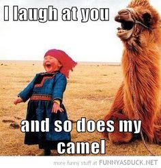 I Laugh At You… And So Does My Camel xD