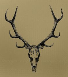 Image result for elk skull