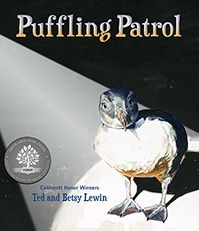 Puffling Patrol Cover. The fascinating story of this unique annual rescue, combined with Ted Lewin's dramatic paintings and Betsy Lewin's lively field sketches, is sure to make Puffling Patrol a hit with animal lovers of all ages.