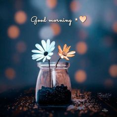 Good Morning Quotes For Him, Good Morning Greetings, Good Morning Good Night, Good Morning Wishes, Good Morning Images Flowers, Morning Flowers, Miniature Photography, Heart Wallpaper, Status Wallpaper