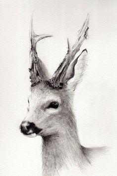 8x12 Fine Art Pencil Drawing Roe Buck by DeerandSwan on Etsy.