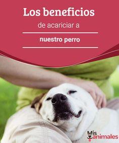 Los beneficios de acariciar a nuestro perro  Cuando estés triste, acude a tu perro. A continuación, te hablamos de los beneficios de acariciar a nuestro perro. ¡No te quedes sin saberlos! #caricias #perro #beneficios #consejos