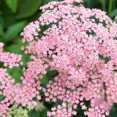 5 seeds to plant now for gorgeous plants next year
