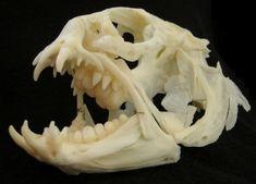 Wolf-Fish Skull