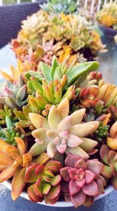 Succulent Plants, Cacti And Succulents, Planting Succulents, Planting Flowers, Little Plants, Small Plants, Indoor Plants, Tiny White Flowers, Exotic Flowers