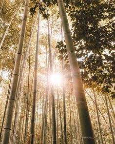 while walking in a bamboo forest in japan. by ravivora