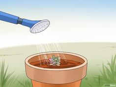 Image titled Propagate Succulents from Leaves Step 13