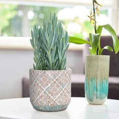 Plant Pots, Potted Plants, Indoor Plants, Indoor Flower Pots, Indoor Garden, Mint Decor, Contemporary Planters, House Plants Decor, Aesthetic Bedroom
