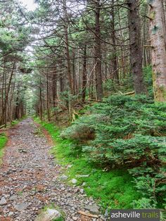 Hike the Appalachian Trail from Carvers Gap, trailing through a lush forest at Roan High Knob