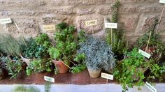 Plantas aromáticas en el Patio recibidor de la Casa de los Infantes