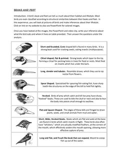 types of birds for kids - Google Search