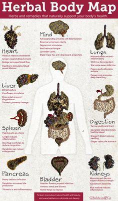 Baldwins Herbal Body Map - Inside Out Beauty