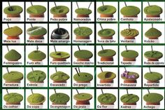 """Organic Yerba mate tea has many health benefits. In South America, it is referred as """"The Drink of the Gods. Samana, Gaucho, Tapas, Yerba Mate Tea, Take Care Of Your Body, Rio Grande Do Sul, Gourds, Health And Nutrition, Benefit"""