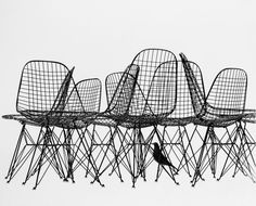 Wire Chairs and Bird Print