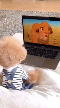 Cute Teacup Puppies, Cute Baby Puppies, Super Cute Puppies, Baby Animals Super Cute, Cute Little Animals, Funny Puppies, Baby Animals Pictures, Cute Animal Photos, Cute Animal Videos