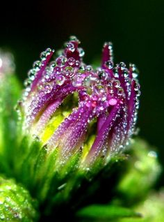 stunning morning dew photography - if you love macro images of dewdrops, go check out these images, they're amazing! Water Photography, Macro Photography, Amazing Photography, Flower Photography, Fotografia Macro, Morning Dew, Early Morning, Monday Morning, Dew Drops