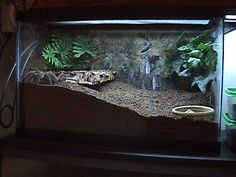 Tarantula Enclosure Many people are scared of spiders. On the other hand, many people enjoy keeping spiders … How to set up your Tarantula Enclosure READ Tarantula Habitat, Tarantula Enclosure, Pet Tarantula, Reptile Habitat, Reptile Room, Reptile Cage, Animal Z, Animal Room, Animal Care