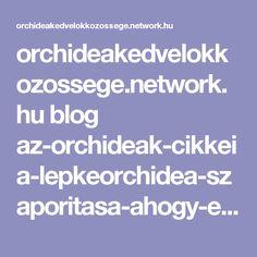 orchideakedvelokkozossege.network.hu blog az-orchideak-cikkei a-lepkeorchidea-szaporitasa-ahogy-en-csinalom