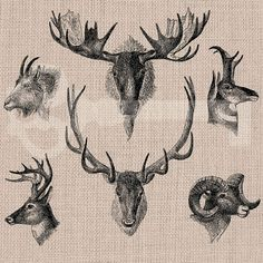 Animal Heads Illustration Digital Graphic  by TanglesGraphics, $1.00