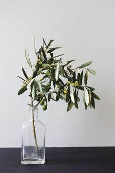 Nada más fácil que una botella de vidrio y una rama de olivo para aportar un poco de verde a tu casa #DecorarConPlantas