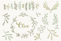 Olive Branch Clip Art & Vectors by The Pen & Brush on Creative Market