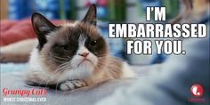 "Grumpy Cat - - something similar has become my biggest criticism lately (""that's embarrassing"")"