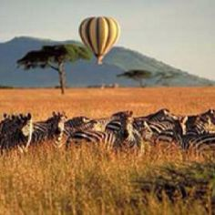 Take a Safari trip in the heart of Africa. I must before I leave this world.