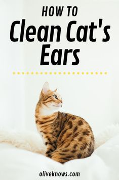 How To Clean Your Cat S Ears Oliveknows Cat Care Indoor Cat Cats