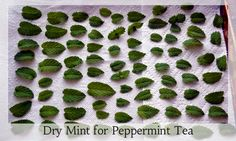 Dry Peppermint from your Herb Garden for Herbal Tea: A how-to @thegreenbacksgal