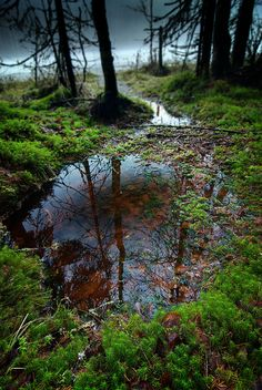 Spring MossSiilinjärvi  photo by Janne flickr