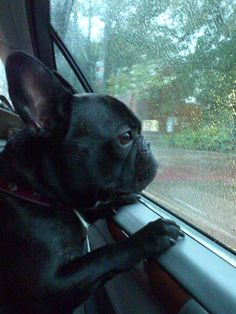 2012-04-11 driving in rain