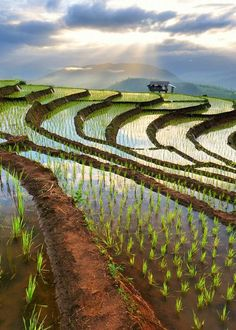 Rijstvelden noord-Vietnam. Kijk voor meer reisinspiratie op www.nativetravel.nl