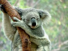 10 Reasons Why You Should Get On A Plane To Australia