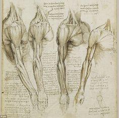 Leonardo da Vinci - Anatomical Studies
