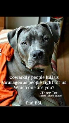 Pit bulls and boxers have huge hearts! Great family dogs, very misunderstood. I miss my Truman.